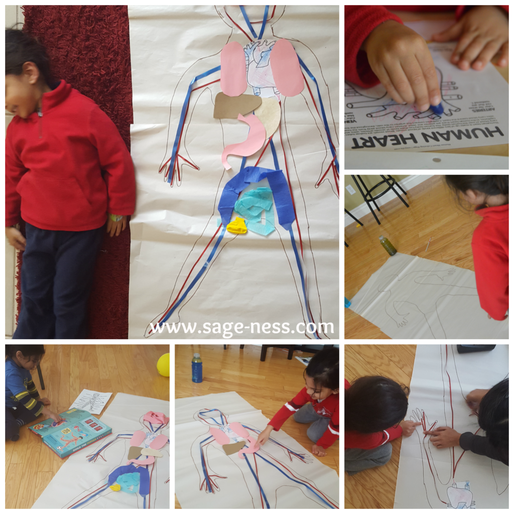 Toddler S learns about the Human Heart in February
